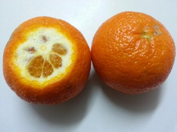 Fructul Nova