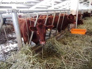 Karpaten Meat - carne de vită marmorată Angus - Produs în Sibiu