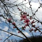 Mai vine odată primăvara?