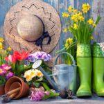 Sănătatea la îndemână. Natura renaște – și noi odată cu ea