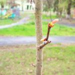 La 34 de ani, am plantat primul meu copac